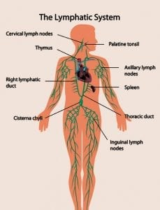 Yoga and the Lymphatic System - Kidding Around Yoga